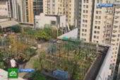Свой огород на крыше — это может быть доходно